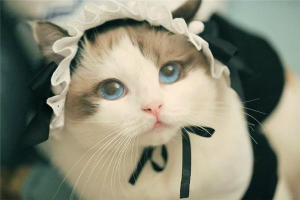 Nằm mơ thấy mèo