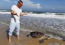 Rùa biển chết vì do mắc bẫy khi đang bơi vào bờ đẻ trứng