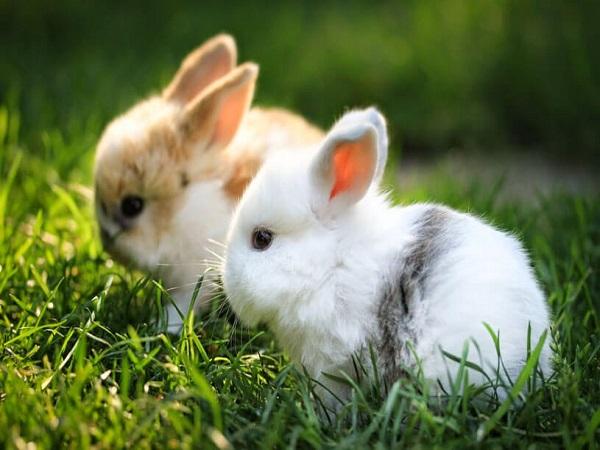 Mơ thấy thỏ điềm gì?