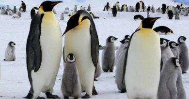 Mơ thấy chim cánh cụt đánh số mấy? Là hung hay cát